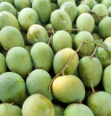 Himsagar Mango from Naogaon