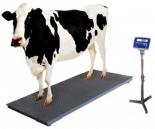 Cow Weight Machine
