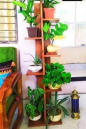 Standing Tree Plant Wooden Rack