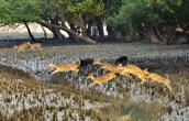 Sundarban 3-Days 2-Night Tour Package