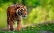 3 Days 2 Night Dhaka to Sundarban Tour Package