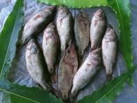 Meni Fish of the Haor