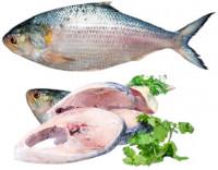 Chandpur Hilsa Fish