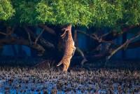 Sundarban 2-Days 1-Night Tour Package