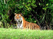 Dhaka-Sundarban-Dhaka 3N Special Adventure Tour Package