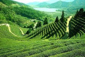 Darjeeling-Mirik-Siliguri 5 Nights 4 Days India Tour Package