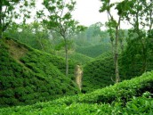 Sreemangal Moulvibazar 3 Days 2 Nights Non AC Tour Package