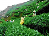 Sylhet Three Days Two Nights 2 Star Hotel Tour Package