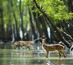 Sundarban Hiron Point Three Days Adventurous Tour Package