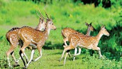 Amazing Sundarban 3 Days Kotka-Kochikhali Tour Package