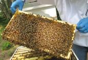 Natural Black Seed Honey