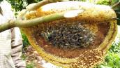 Natural Mixed Flower Honey
