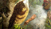Sundarbans 100% Pure Natural Honey