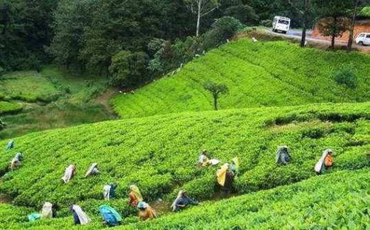 Srimangal Tour From Sylhet 1 Day Night Ac Hotel Transport